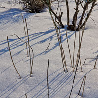 snow-and-shadows